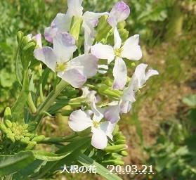 f:id:mikawakinta63:20200321205823j:plain