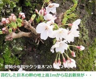 f:id:mikawakinta63:20200331165313j:plain