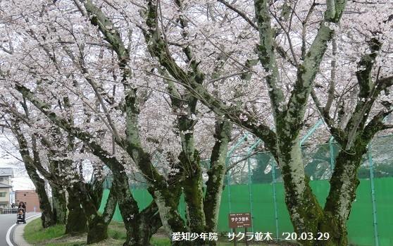 f:id:mikawakinta63:20200331165349j:plain