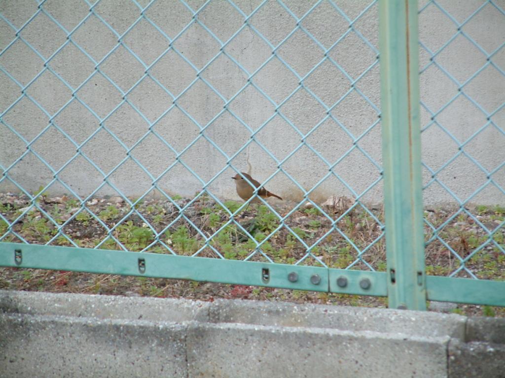 f:id:mikawakougei:20161208002221j:plain