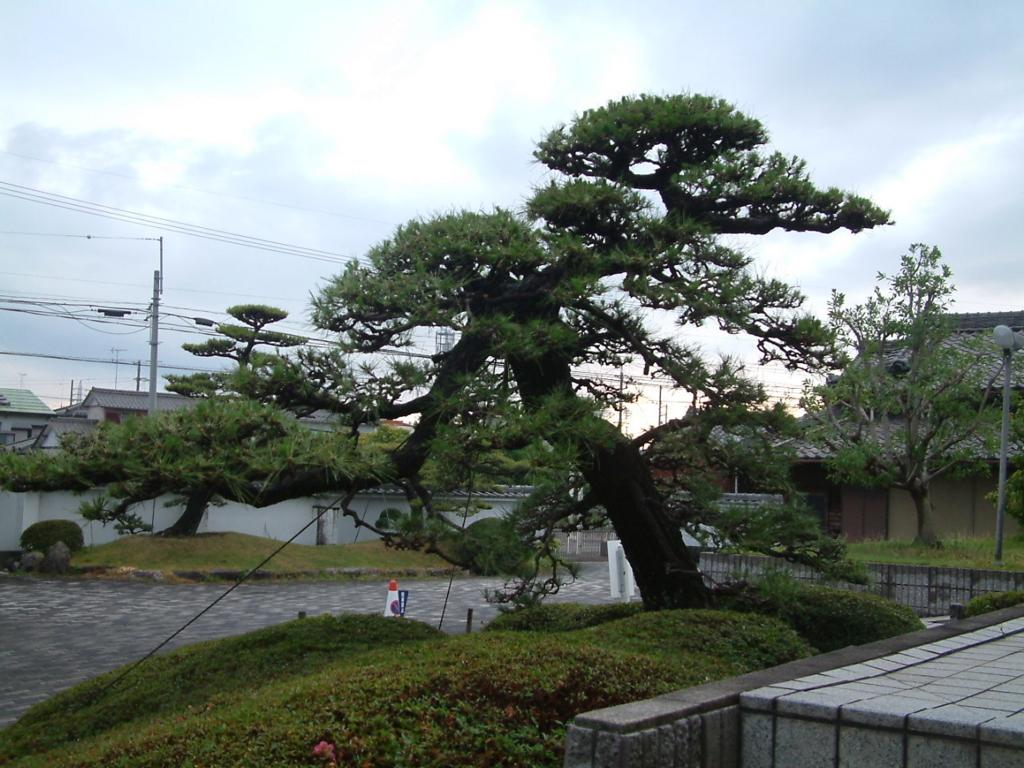 f:id:mikawakougei:20170622032932j:plain