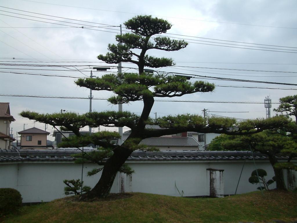 f:id:mikawakougei:20170622034750j:plain