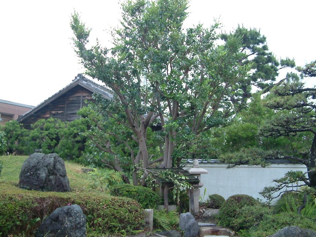 f:id:mikawakougei:20170622035537j:plain