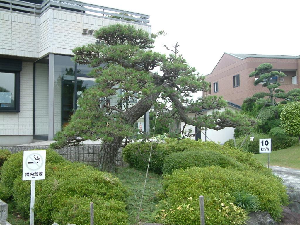 f:id:mikawakougei:20180609031410j:plain