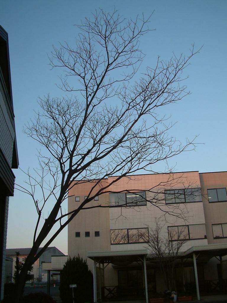 f:id:mikawakougei:20190218042040j:plain