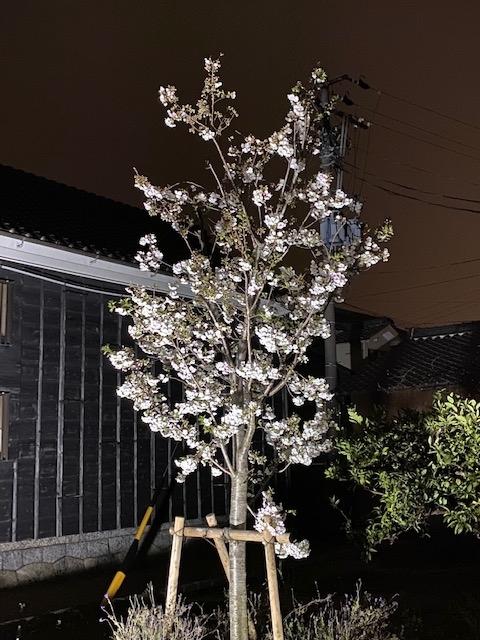 f:id:mikawakougei:20200329025949j:plain