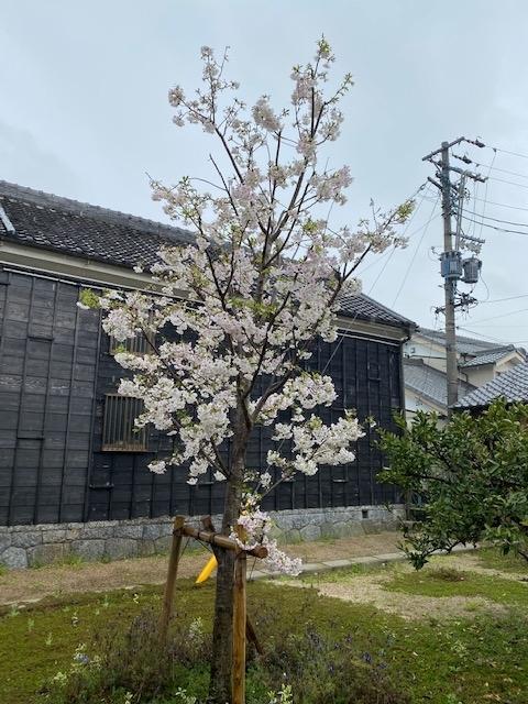 f:id:mikawakougei:20200401023024j:plain