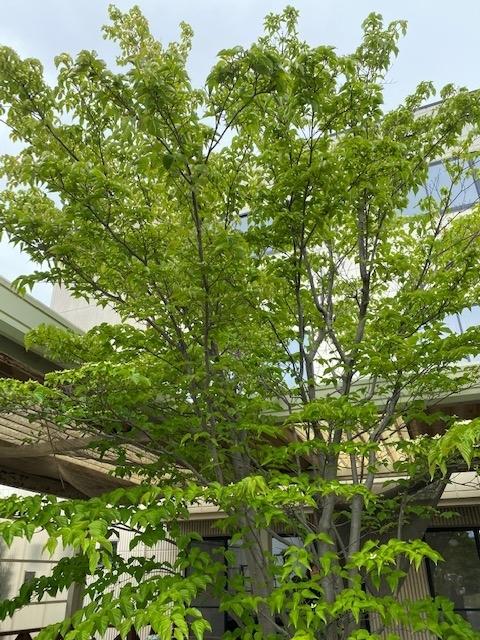 f:id:mikawakougei:20200506123212j:plain
