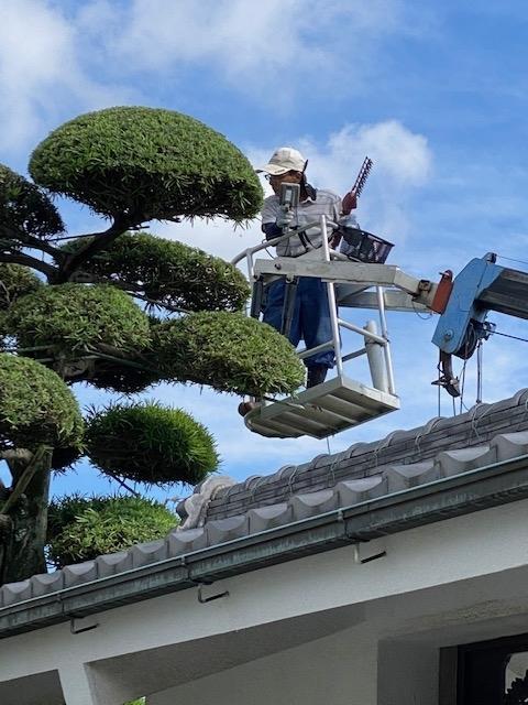 f:id:mikawakougei:20200625021254j:plain