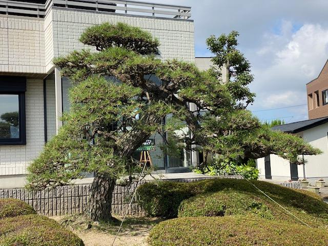 f:id:mikawakougei:20200625021650j:plain