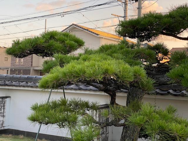 f:id:mikawakougei:20201007022115j:plain