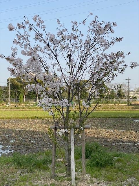 f:id:mikawakougei:20210402012451j:plain