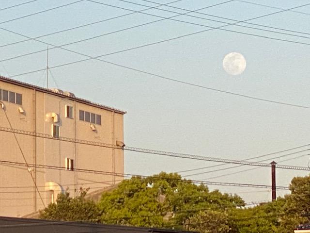 f:id:mikawakougei:20210427010228j:plain