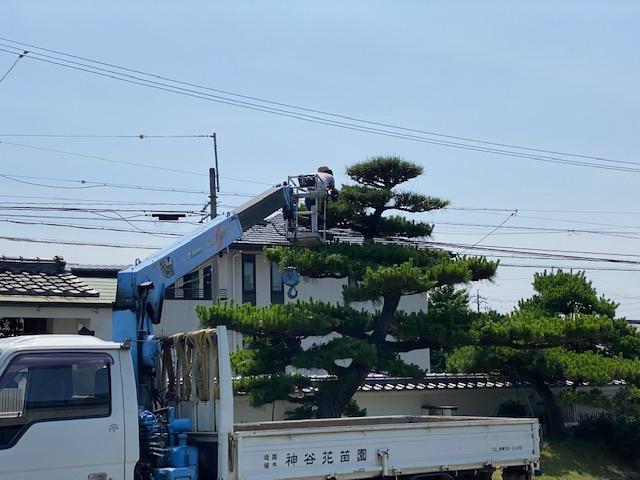 f:id:mikawakougei:20210616000823j:plain