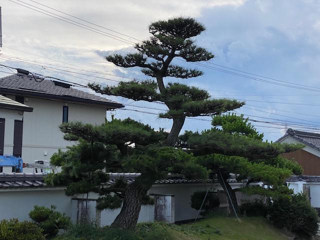 f:id:mikawakougei:20210618012513j:plain