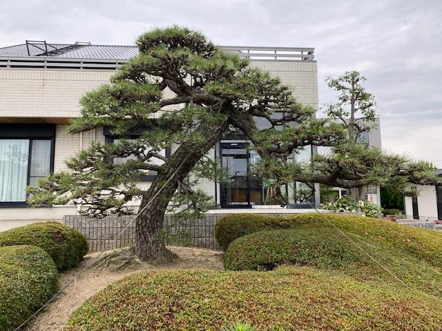 f:id:mikawakougei:20210627013651j:plain