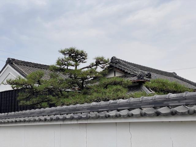 f:id:mikawakougei:20210627020442j:plain