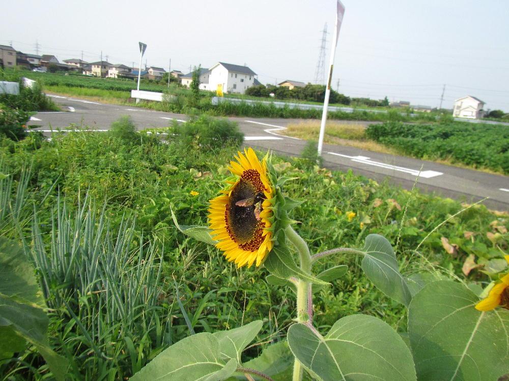 f:id:mikawaosamushi:20200810171710j:plain