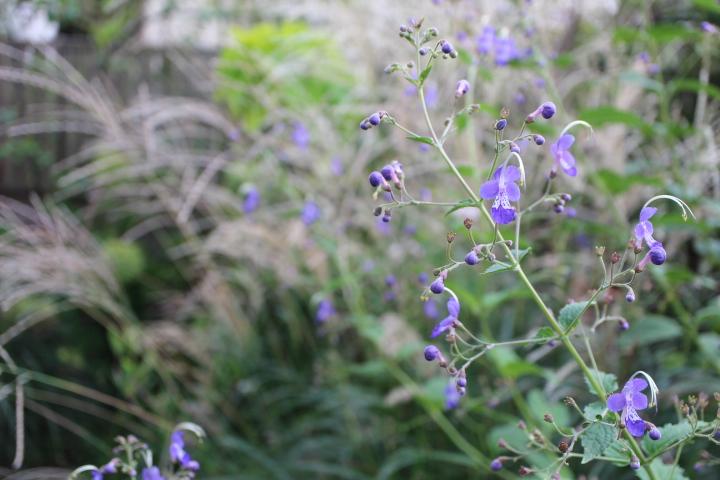 雁金草が茂る向こうに薄の穂が揺れる