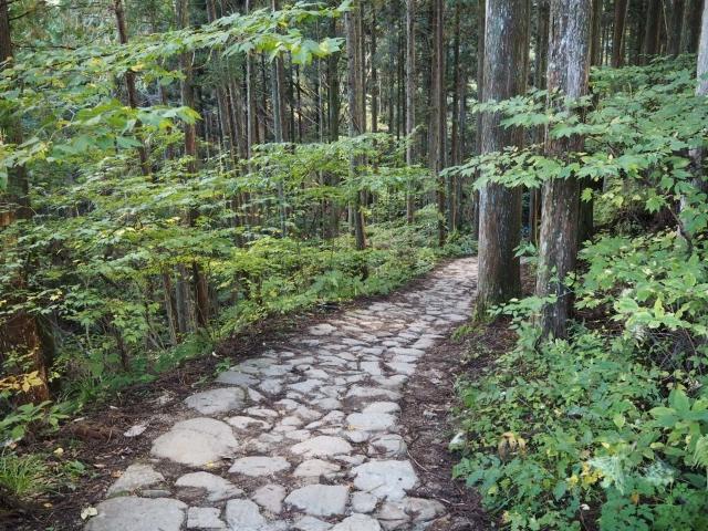 左右にうっそうとした木々のある山の中の道