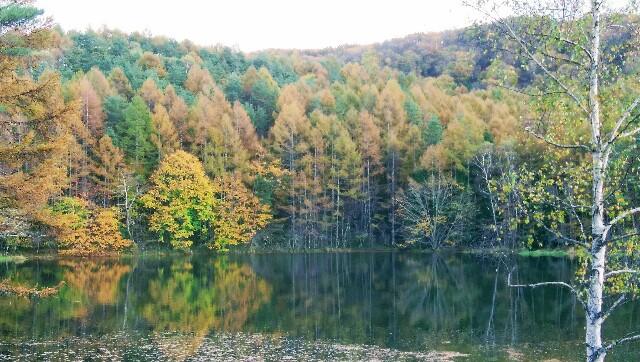 黄色、茶色、緑が混じって紅葉した木々が池の水面に映っている。