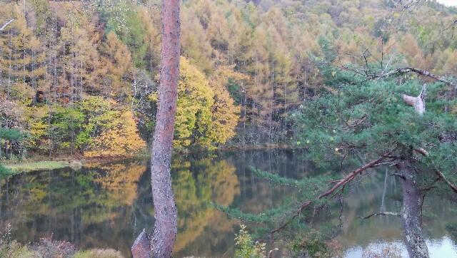 池の左側から見える紅葉した木々と水面