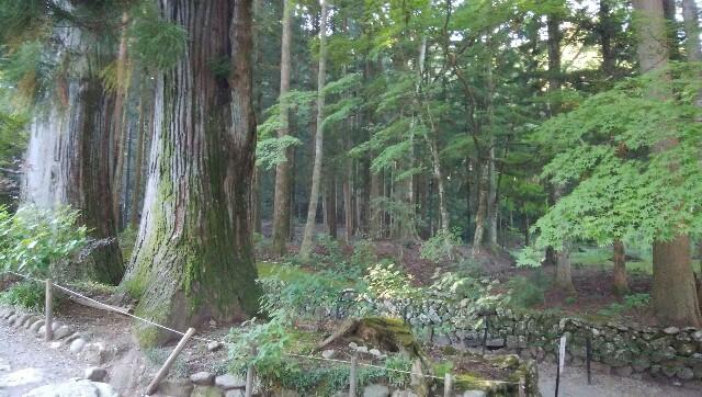 木々が茂る森のような敷地内の様子