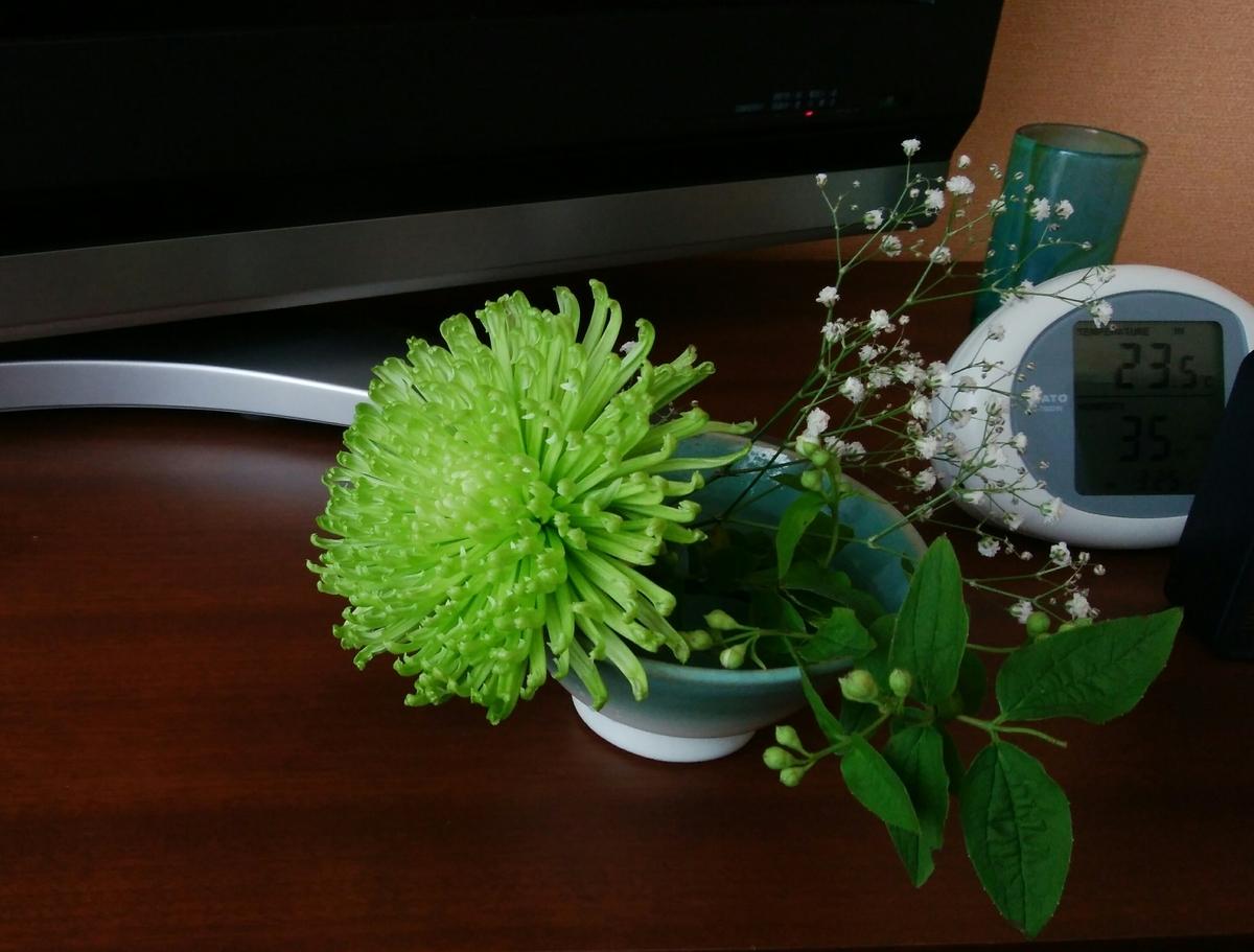 テレビ台の上に薄緑色の菊などが生けられている