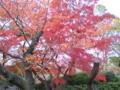 [神戸]王子動物園。紅葉も
