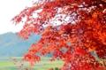 『京都新聞写真コンテスト 晩秋の田園』