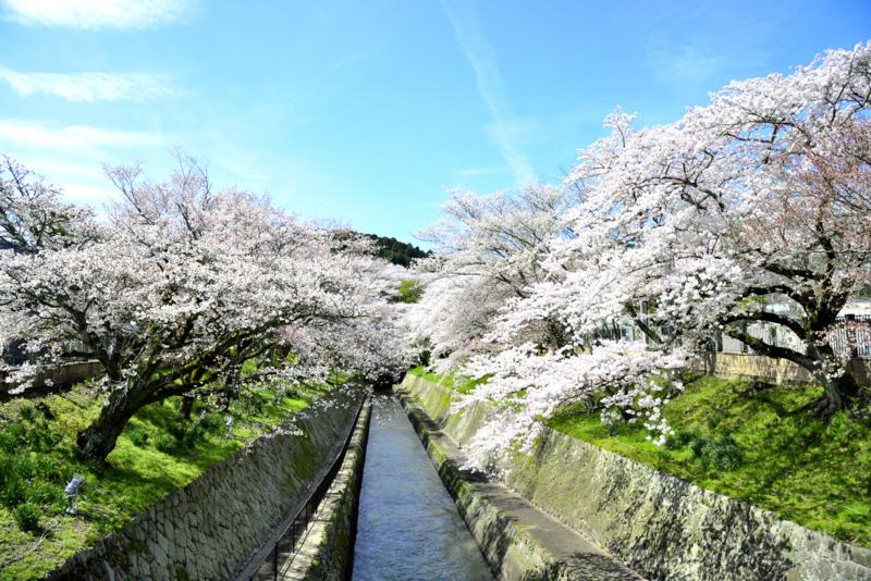 『京都新聞写真コンテスト 花水路』