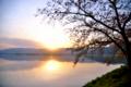 『京都新聞写真コンテスト 葉桜の夕景』