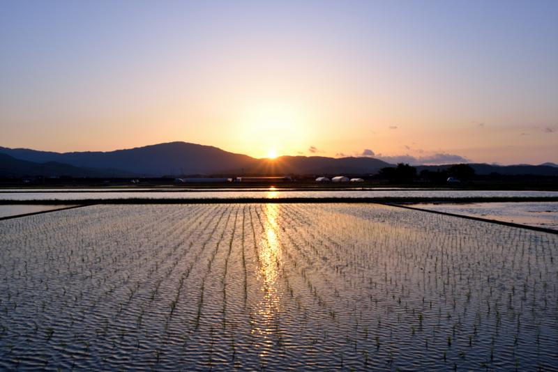 『京都新聞写真コンテスト 田園の夕景』