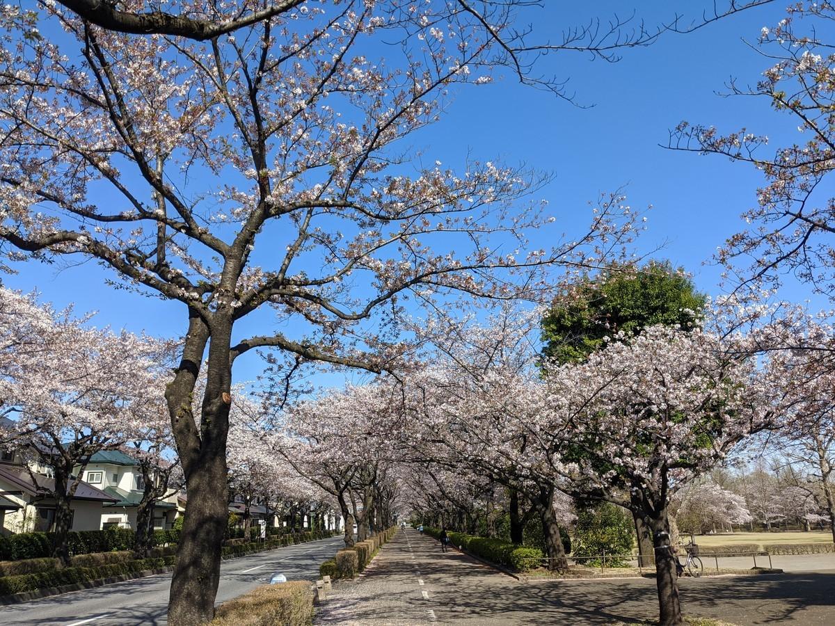 f:id:mikihoshi:20200406083323j:plain