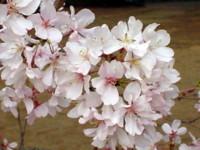 f:id:mikiya_law_office:20100415142042j:image:left