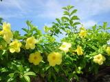 f:id:mikiya_law_office:20110803104441j:image:left
