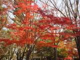 f:id:mikiya_law_office:20111221143758j:image:left