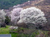 f:id:mikiya_law_office:20120404104145j:image:left