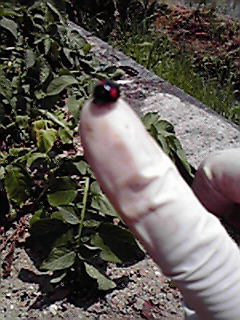 f:id:mikkabouzugadame:20100612231344j:image