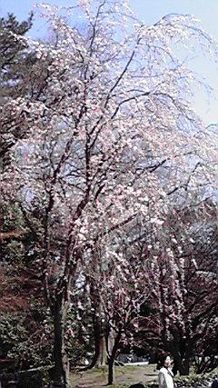 f:id:mikkabouzugadame:20110402213618j:image