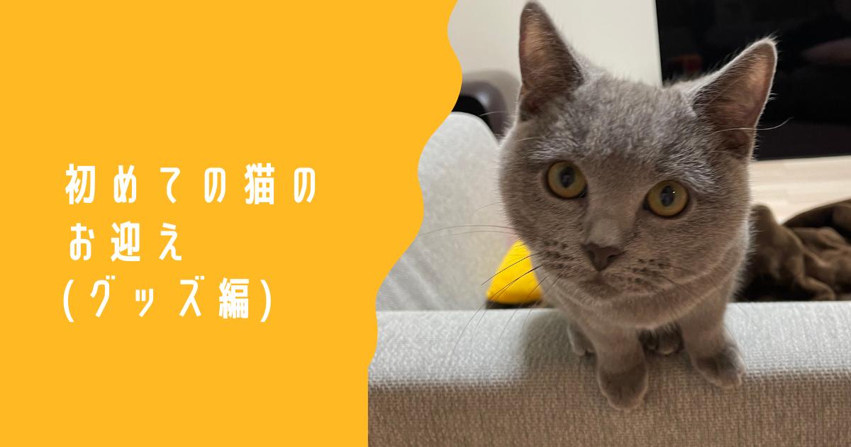 f:id:mikkihiiri:20210222212158p:plain