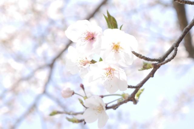 f:id:miko_shuke:20170416182146j:image