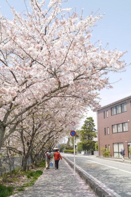 f:id:miko_shuke:20170416182307j:image