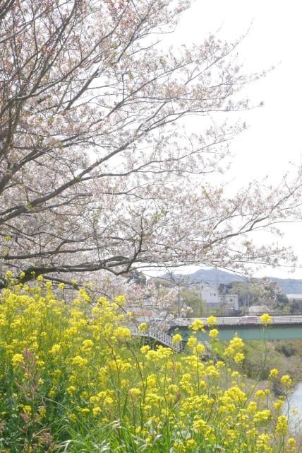f:id:miko_shuke:20170416182457j:image