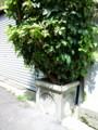 [高架下建築ツアー][美章園]会所植木鉢