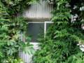 [高架下建築ツアー][美章園]ジャングル窓