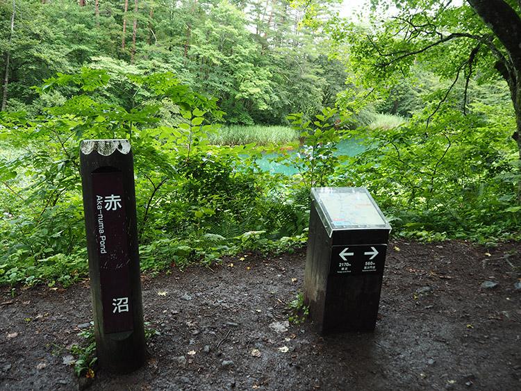 f:id:mikonekogorira:20170910125951j:plain