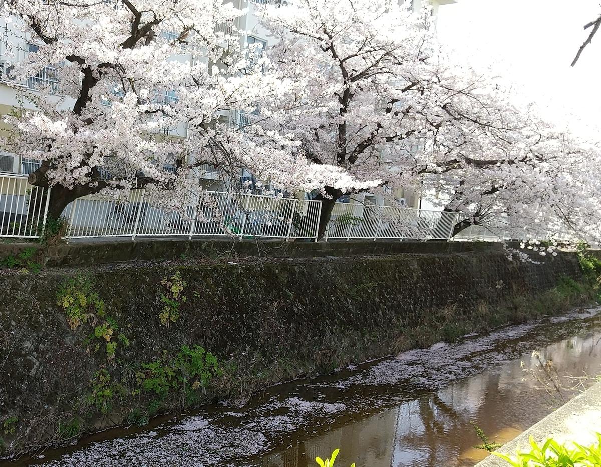f:id:mikonohana:20210404161252j:plain