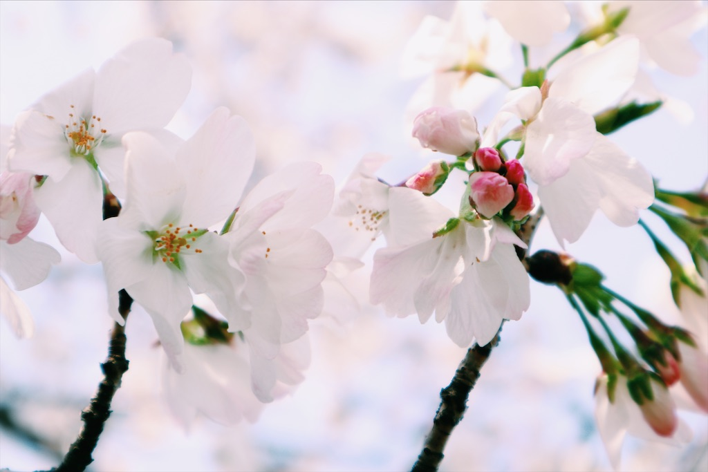 f:id:mikoto_life:20210107221958j:image