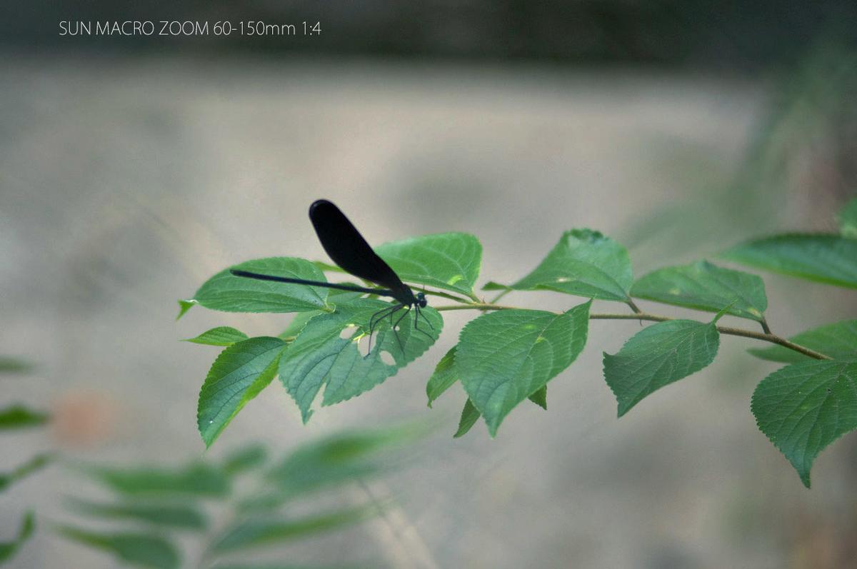 f:id:mikucharat5:20210726212132j:plain